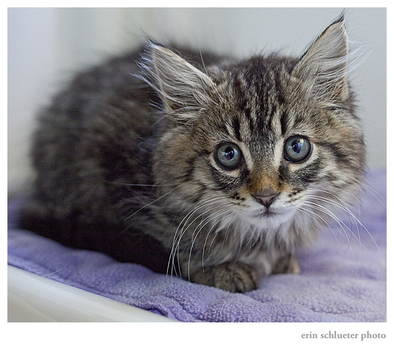 Daniel the Kitten